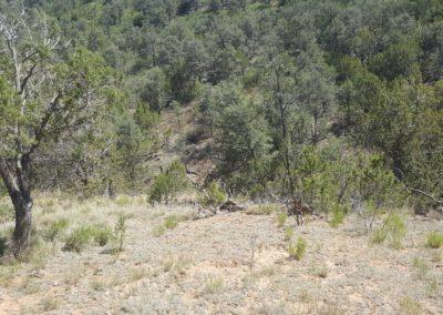 3.5 Acres – Timberon, Otero County, New Mexico