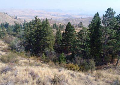 36-97-acres-tonasket-okanogan-county-wa10
