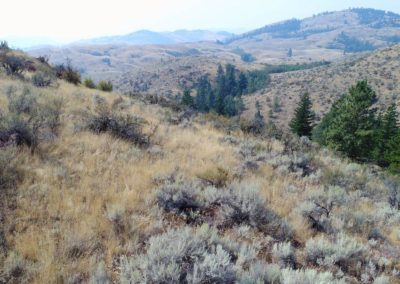 36-97-acres-tonasket-okanogan-county-wa13