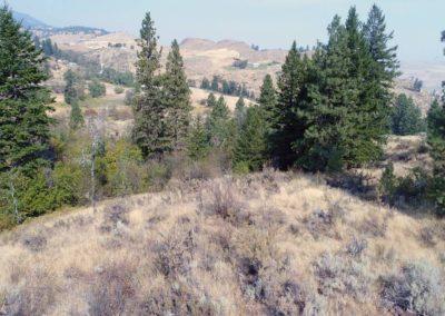 36-97-acres-tonasket-okanogan-county-wa7