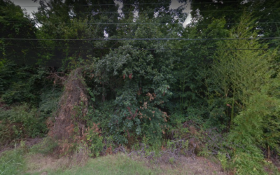Wooded parcel in Dallas County, AR!